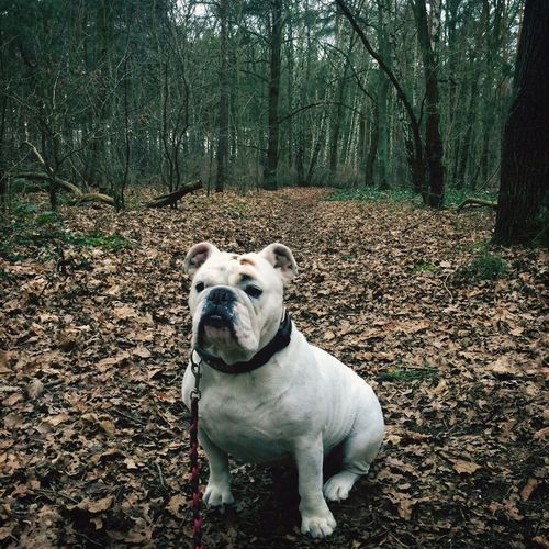 Hund Wald Photo_of_the_day