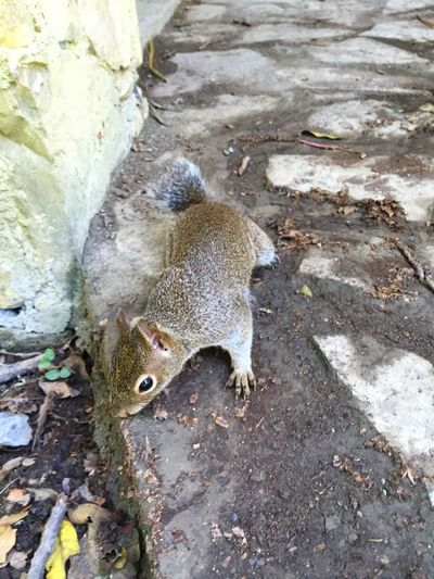 Chipmunk 🐻 Summer15 Chipinque Nature