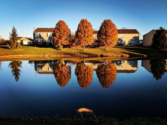 EyeEm Selects morning, sunrise, colors, nature, tree, pond, lake