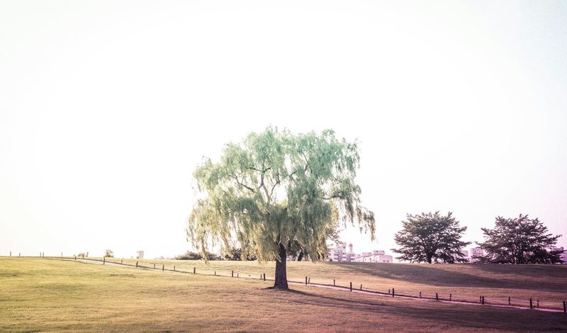 Hugging A Tree Trees EyeEm Nature Lover Scenery At The Park Eye4photography  EyeEm Best Shots EyeEm Korea