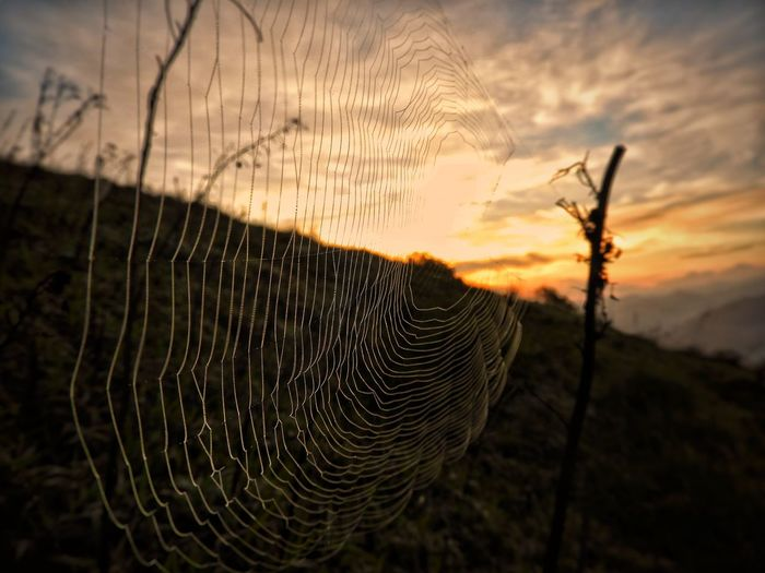 A new day in the Sierra Nevada of Santa. Sierra Nevada Summer Exploratorium Nature_collection Colombiamagiasalvaje Nature Photographyislife Wildlife Mountaingede EyeEm Selects Sunset Trapped Spider Web Sky Close-up Jumping Spider Butterfly - Insect Insect Spider