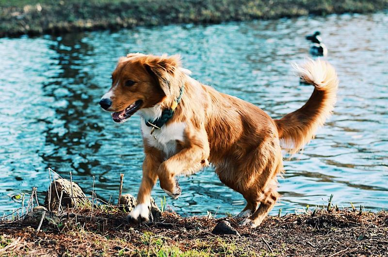 Appie Amsterdam Novia Scotia Park Outside Energetic Playful Cute Dog Water Pets One Animal Lake Animal Themes Domestic Animals Day Outdoors Portrait Standing No People Full Length Nature Mammal EyeEmNewHere