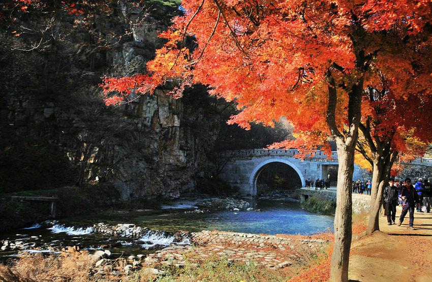 Munkyungu] ng Munkyungsaejae autumn Castle Wall Brook Autumn Foliage Autumn Leaves Autumn Colors