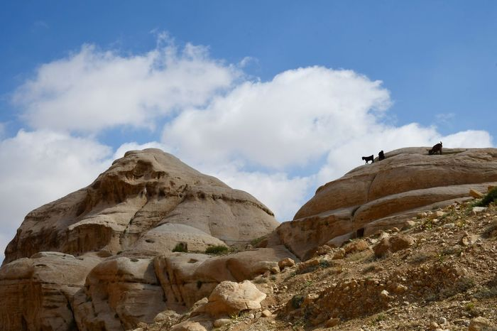 Goats Jordan Petra Beauty In Nature Cloud - Sky Landscape Low Angle View Mountain No People Physical Geography