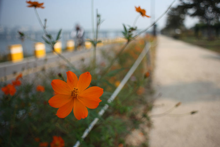 Hangang river, Seoul No Filter No Touch Hangang Park Seoul Hangang River Black & White