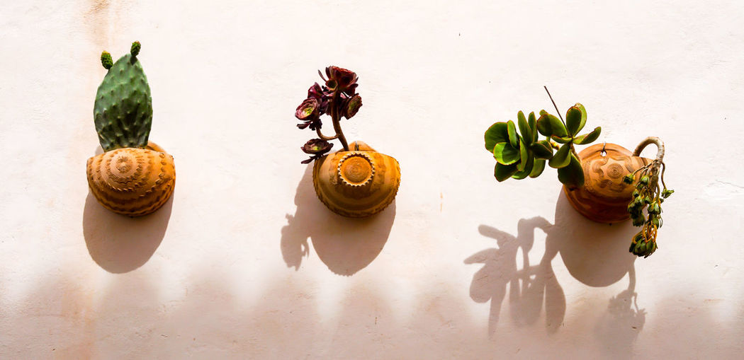 Art Cactus Cactus Flower Close-up Dried Fruit Facade Detail Flower Pot Food And Drink Freshness Fruit In A Row Leaf Light And Shadow No People Outdoors Still Life Studio Shot Table Vegetable White Background