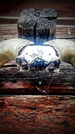 Skull Skully Skulls 💀 SkullOfTheDay Skulls And Bones Skulls & Bones Skullart Skullface Skull Art Skulls💀 Skulls♥ Skull Face Skullhead Skulls Horns Things