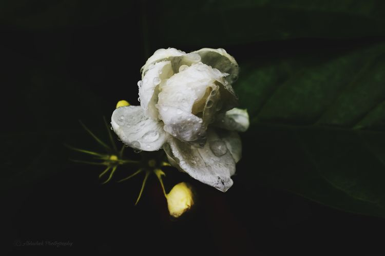 Flower 🌼 Black