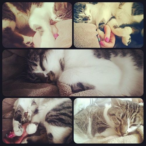 Izzy snoozed on my arm for over an hour. Adorableness ensued. Izzykitty Kittensnuggles Qualitypettime Snowysunday