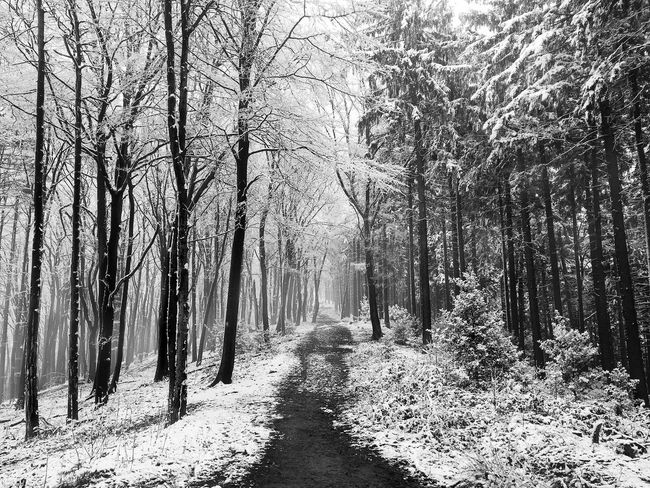 An Eye For Travel Path Shades Of Winter Bare Tree Beauty In Nature Blackandwhite Blackandwhite Photography Day Forest Landscape Mist Nature No People Outdoors Path In Nature Scenics The Way Forward Tranquil Scene Tranquility Tree