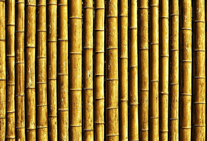 bamboo wall EyeEm Best Edits EyeEm Best Shots Construction Material Construction Materials Green Architecture Architectural Detail Wooden Bamboo Bamboo Fence Fence Backgrounds Textures And Surfaces Textured  Background Surfaces And Textures Color Palette