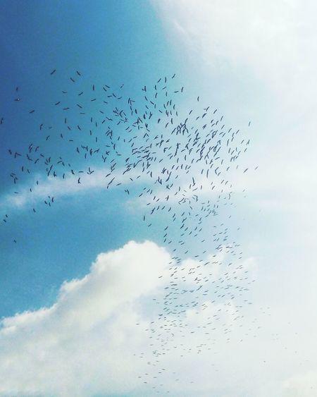 Flock of birds flying against blue sky