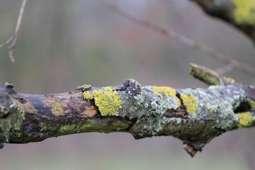Focus On Foreground Day Outdoors Nature Close-up No People Branch Lichen Tree Animals In The Wild Animal Themes Beauty In Nature Reptile Autumn17 Herbst17 🦋 Autumn Beauty In Nature Tree Tranquility Textured  Forest
