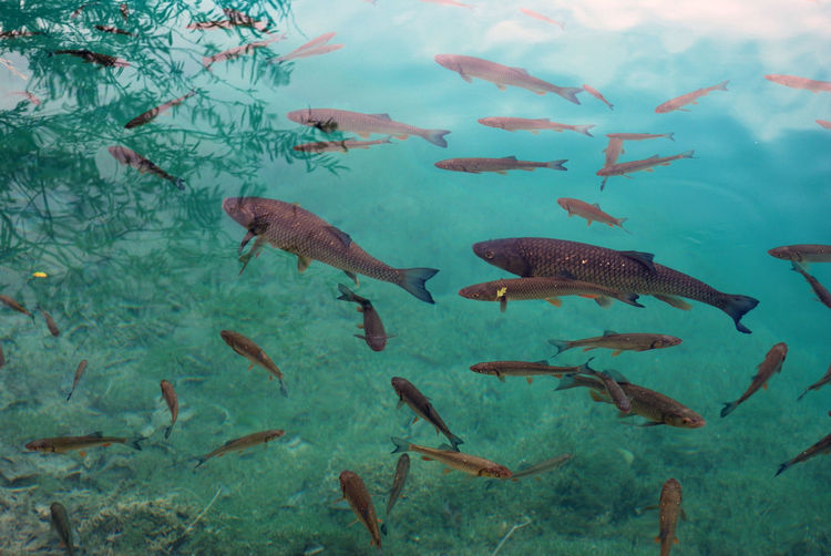 Fish swimming in lake