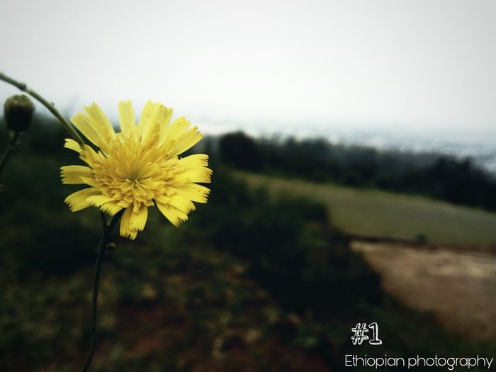 Summer time New Flower Addis Ababa Love Photography Ethiopian Photography
