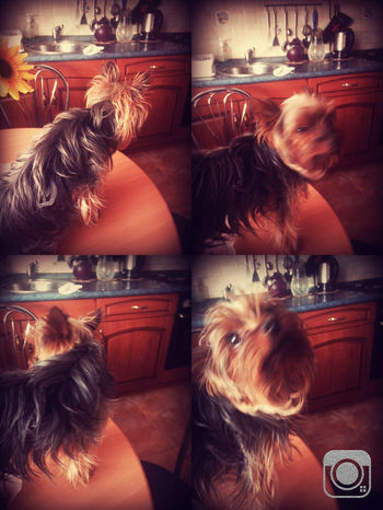 My Crazy Dog <3 😂😂😜 Playing With The Animals My Love he had strange hobby😂😂😀sat on the table 😎🐶🐶