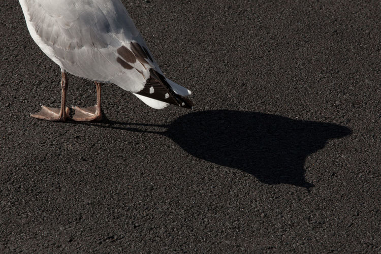 Chickens Street Shadow Seagull Light And Shadow Ground Different Bird Feathers EyeEm Ready   Visual Creativity My Best Photo