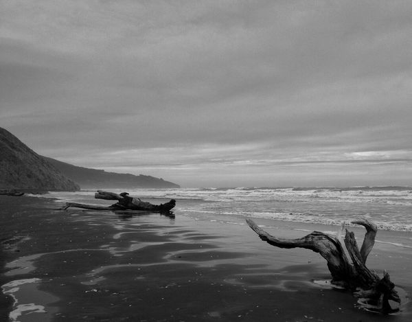 Shades Of Grey Beach Beachphotography Raglan New Zealand Wood Blackandwhite IPS2016Landscape