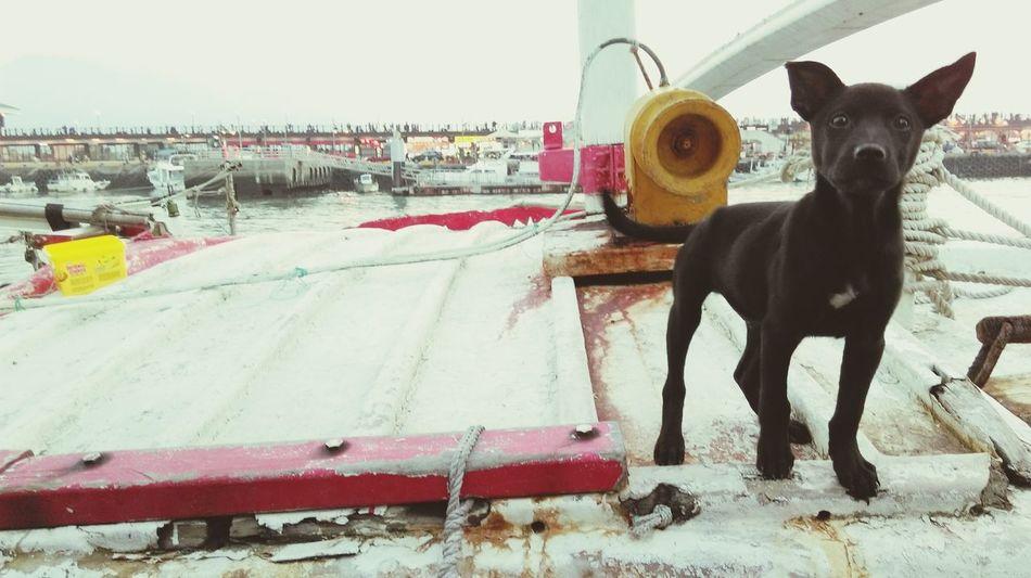 台灣犬❀小黑zzz… Dog Days Playing With The Animals Dog Life Dog Cute Dog  Cute Pets Black On The Ship Riverside Fishing Boat