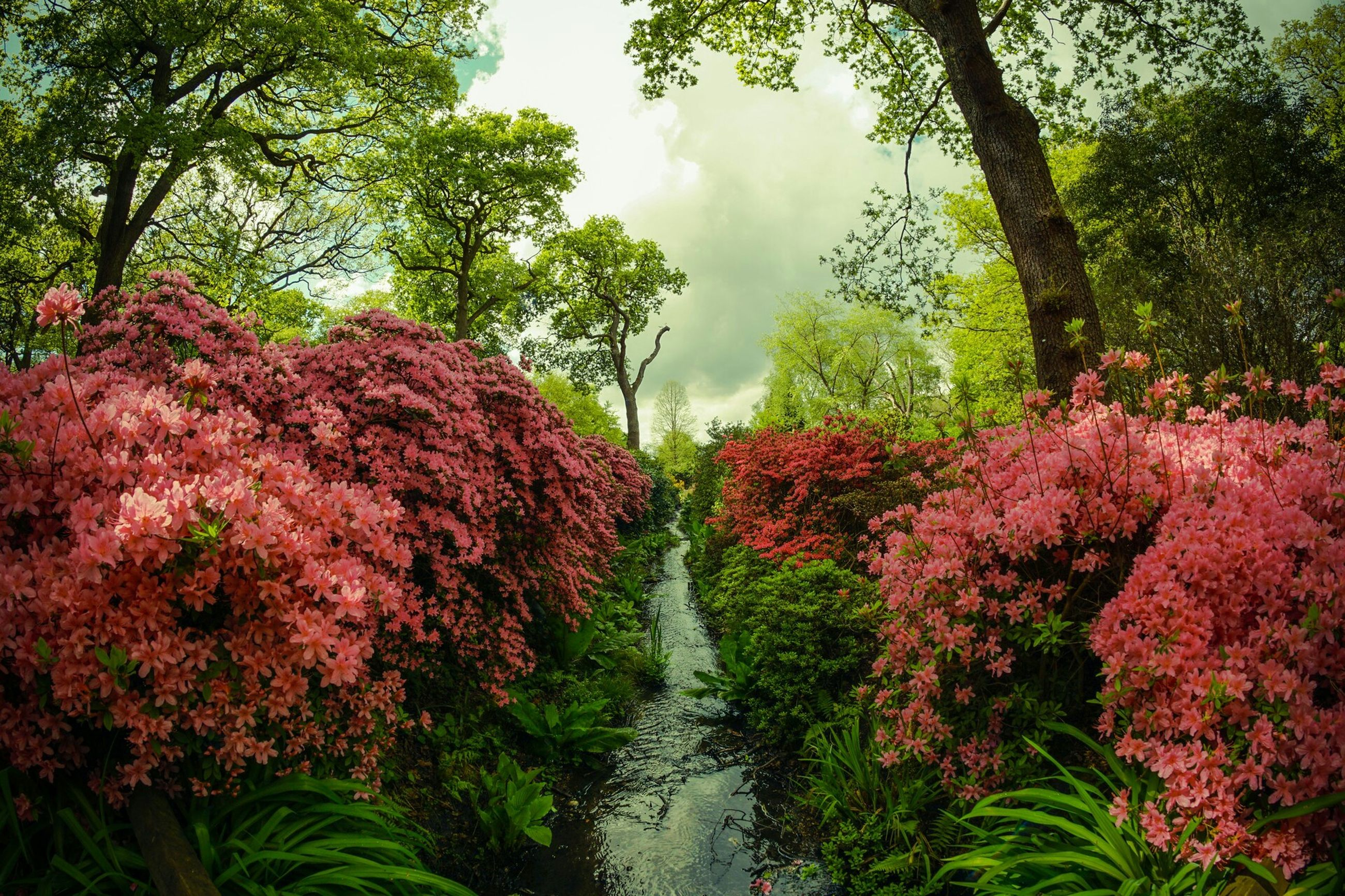 tree, growth, flower, beauty in nature, nature, plant, tranquility, tranquil scene, sky, freshness, red, green color, scenics, day, outdoors, branch, no people, leaf, park - man made space, pink color