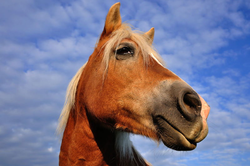 Mr. Ed Hello Pferd Close-up Domestic Animals Horse One Animal Outdoors Pferdekopf Portrait Sky