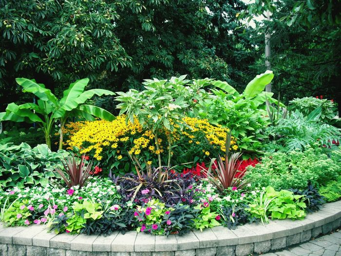 Vibrant Flower Garden Flowering Perrenials Floralplanter Yellow Flowers Plants Inbloom