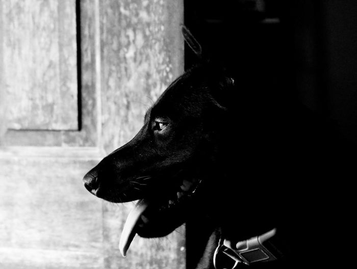 this is my grand daughter...Cambodia Dog Dog Portrait Eyeem Market Fresh On Market July 2016 Bnw Bnwphotography