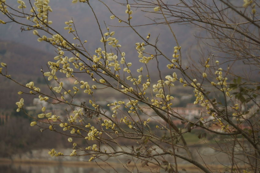 Background Blur Blur Background Blur Lake Blurred Background Cluody_sky Day Flower Flowerporn Lake View Landascape Nature No People Outdoors Rossano Grimoldi Winter Flowers