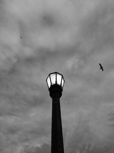 Bird Street Light Flying Cloud - Sky Lighting Equipment Tall - High City Building Exterior Lamp Streetphotography Blackandwhite Dramatic Sky Streetlights Low Angle View Bird Animal Themes One Animal Street Light Flying Tower Cloud - Sky Sky Architecture Lighting Equipment Built Structure