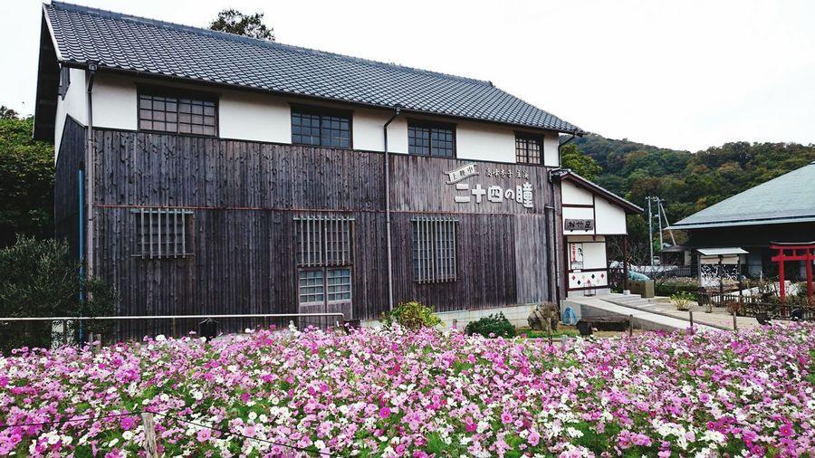 【Kagawa,Japan】Tw