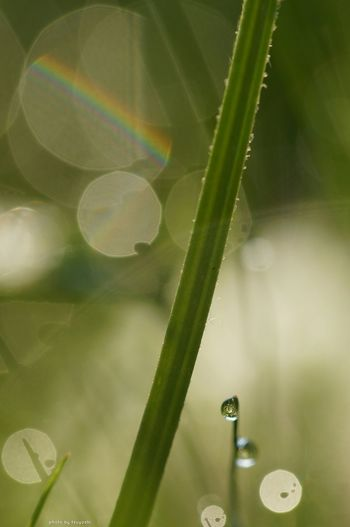 おはようございます(^o^)/ Sony α♡Love EyeEm Nature Lover Water Drops Getting Inspired Macro Photography Plants 🌱 Depth Of Field *CHIE*