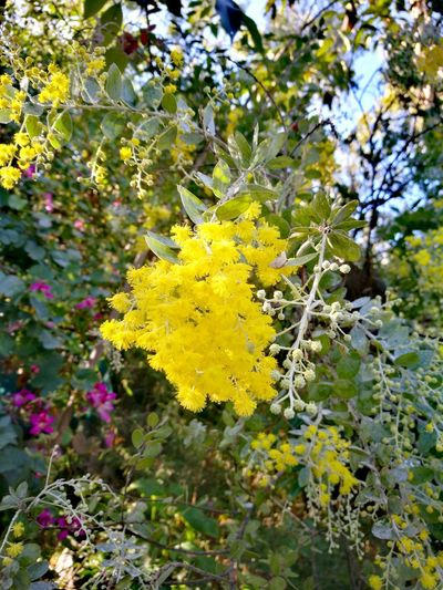 Tree Yellow Flower Leaf Close-up Plant Life Branch Flower Tree In Bloom Flower Head Petal Botany Growing Blooming