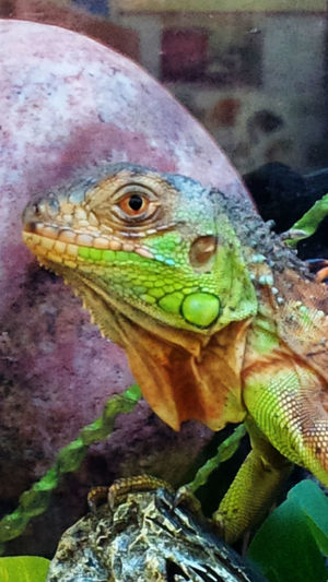 Animal Themes Animal Wildlife Animals In The Wild Close-up Day Nature No People One Animal Outdoors Reptile