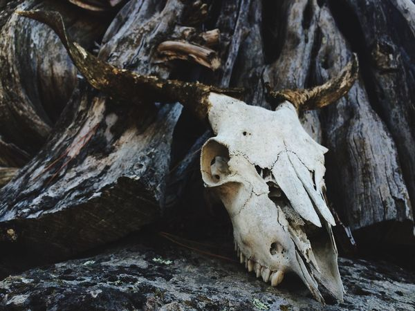 50+ Animal Skeleton Pictures HD | Download Authentic Images