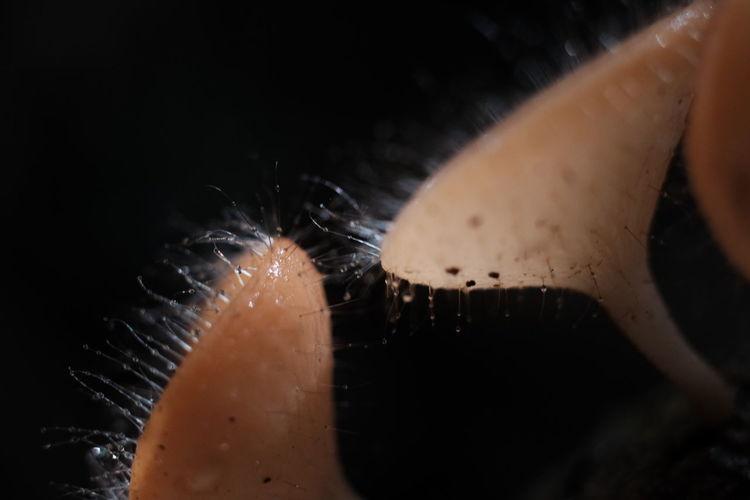 Close-up of mushroom in water