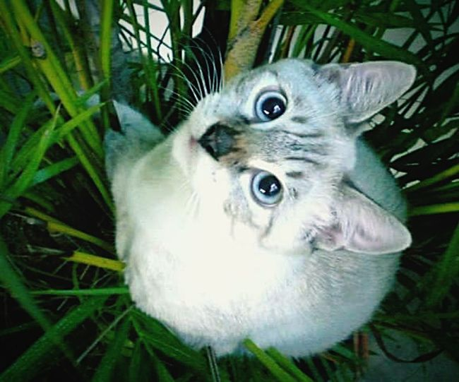 Hi! Hello World That's boboy My Cat♥ Jungle Boy....... For Cat Cat Lovers EyeEm Cats Lover Animal_collection