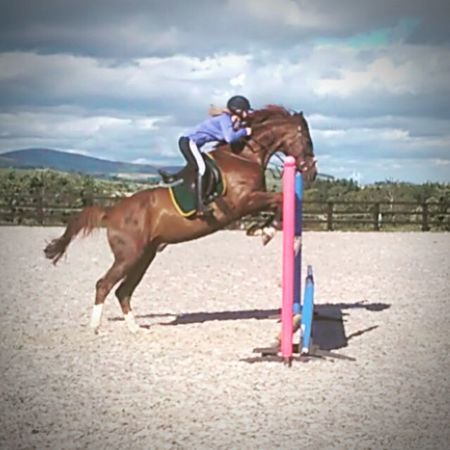 Iam Hektor . A bit fuzzy since I was taken by my mum on a crappy phone. Horse Showjumping Chestnut Warmblood