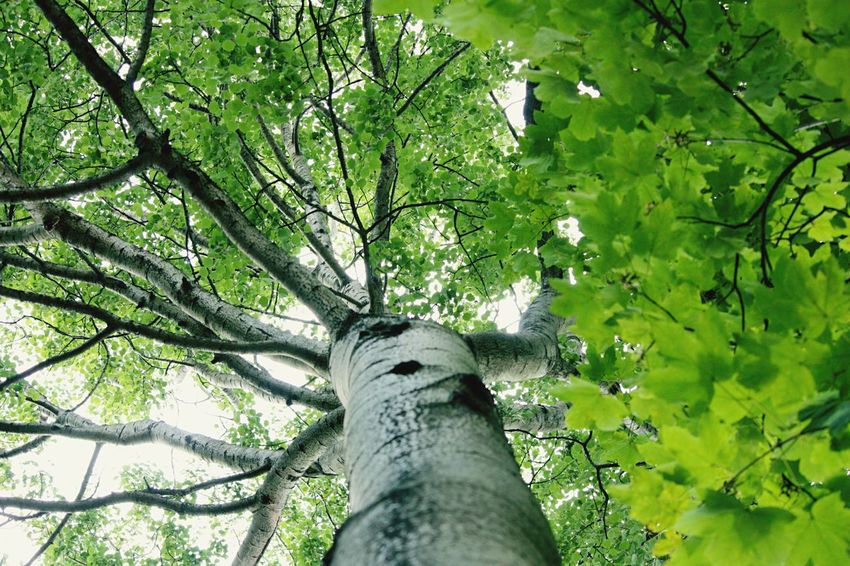 Hello World Hello Hamburg TreePorn Trees Tree_collection  Taking Photos Enjoying Life Click Click 📷📷📷 My Point Of View Nature Outdoors Outdoor Photography Lookingup Taken By Me Green Green Green!  Summer Throughmyeyes Germany🇩🇪