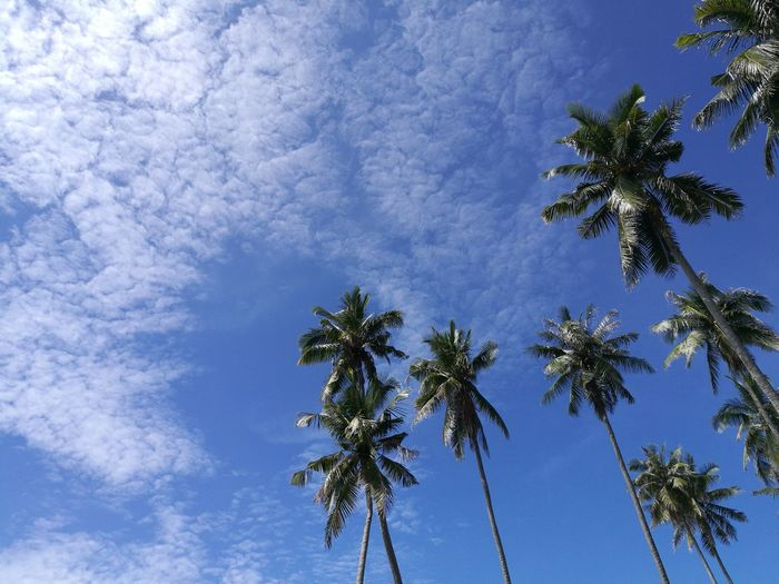 Sky above Kuala Terengganu, Terengganu, Malaysia now (7th December 2016, 12:39 PM). Tree Low Angle View Blue Nature Palm Tree Growth Sky No People Beauty In Nature Outdoors Branch Day Treetop Weather Beauty In Nature The Great Outdoors - 2017 EyeEm Awards