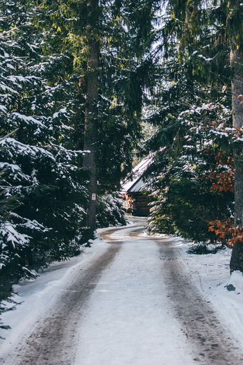 Winter Snow Trees Hut Cabin Wooden Road The Way Forward Nature Forest Tree Path