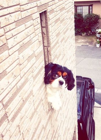 散歩に行きたそぉ~な目だな?✨ 笑