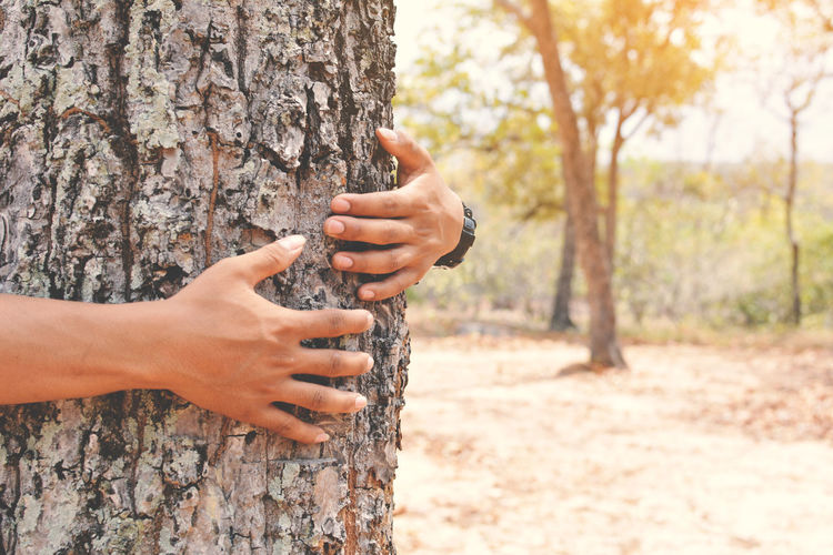 Cropped hand of man embracing tree trunk