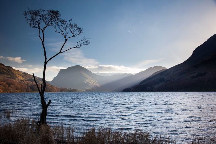 Lone tree Mountain Nature Landscape Water Beauty In Nature Mountain Range Scenics Lake District Cumbria Buttermere