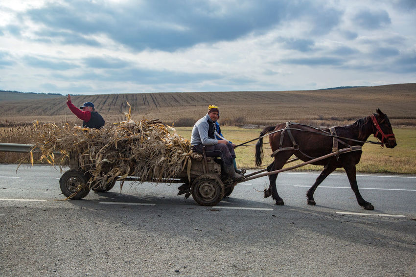 Coachman Autumn Horse Carriage Romania Agricultural Carman Cloud - Sky Fields Horse Maize Leaves Real People Whip
