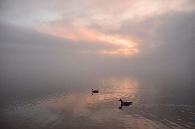 New Years Day 2019 Water Bird Animal Themes Animal Animals In The Wild Animal Wildlife Vertebrate Sky Cloud - Sky Beauty In Nature Scenics - Nature Tranquility Nature Sunset Sea Tranquil Scene Swimming One Animal No People Outdoors Duck
