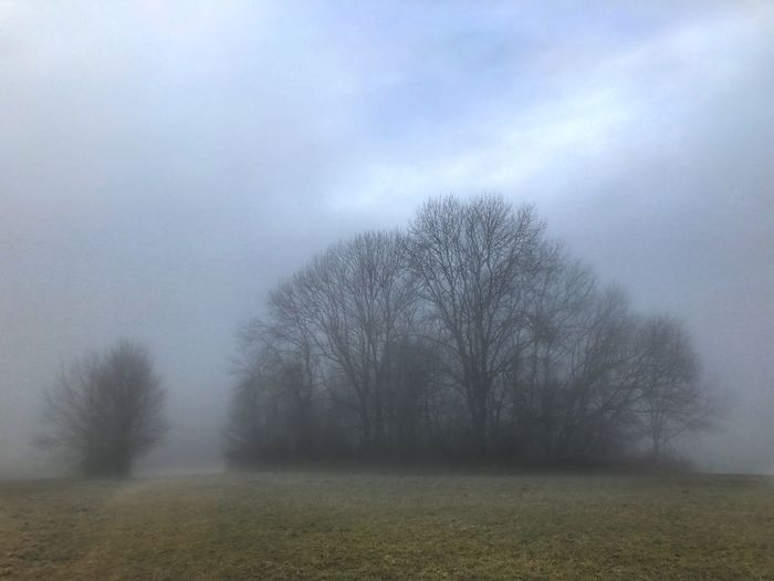 Nebellandschaft Nebellandschaft Nebel Schwabenland Schwäbische Alb Germany Landscape Tranquility Bare Tree Beauty In Nature Nature Tranquil Scene Field Tree Fog Outdoors Scenics Sky Day No People Branch Grass
