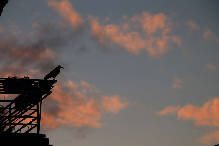Low Angle View Of Bird Perched On Balcony At Sunset
