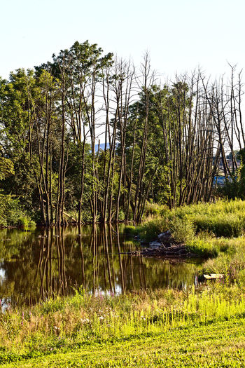 Beauty In Nature Day Grass Green Color Growth Landesgartenschau Landesgartenschau2016Bayreuth Landscape Lush - Description Nature No People Outdoors Plant Roter Main Sky Tree Water