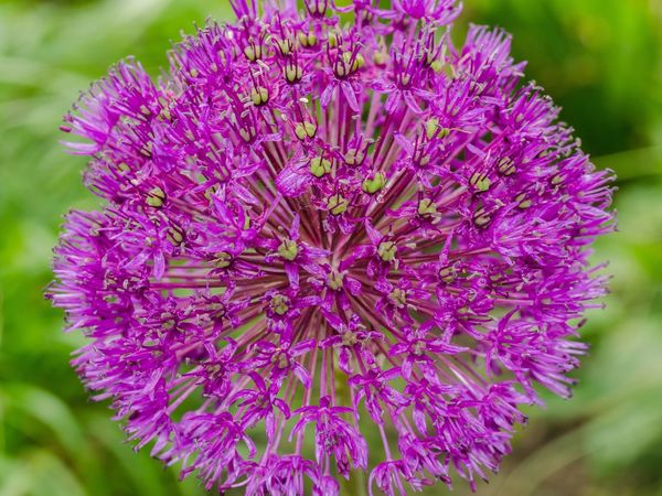 Flower Beauty In Nature Nature Fragility Purple Growth Petal Freshness Flower Head Day Plant No People Outdoors Blooming Close-up Centered Composition Centered Object Centered Perspective