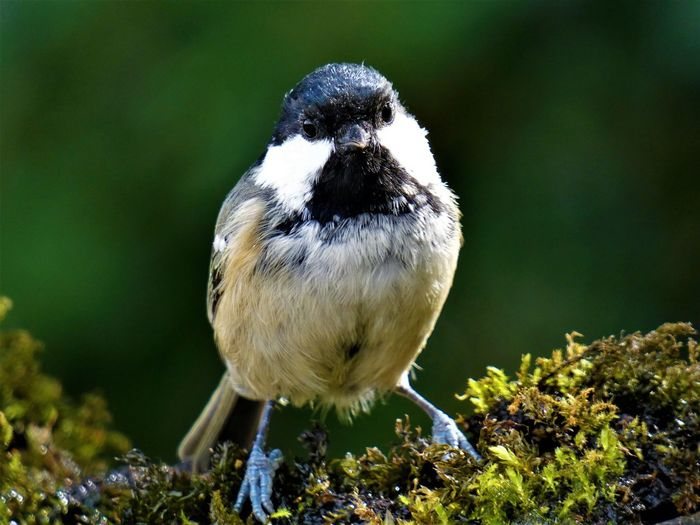Close-up portrait of bird on moss
